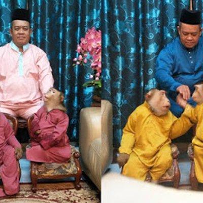 Viral Sepasang Beruk Pakai Baju Raya Tarik Perhatian Netizen